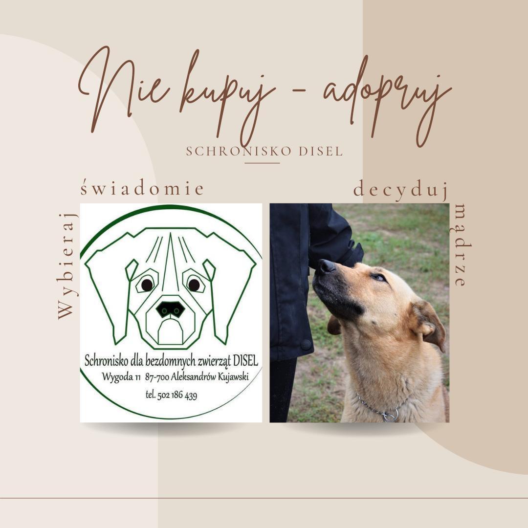 adopcja psów schronisko disel